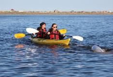 Kayaking With Beluga Whale In Churchill Manitoba
