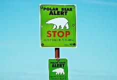 Polar Bear Alert Sign In Churchill Manitoba