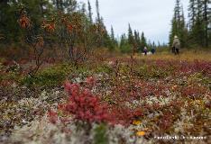 boreal forest walk2