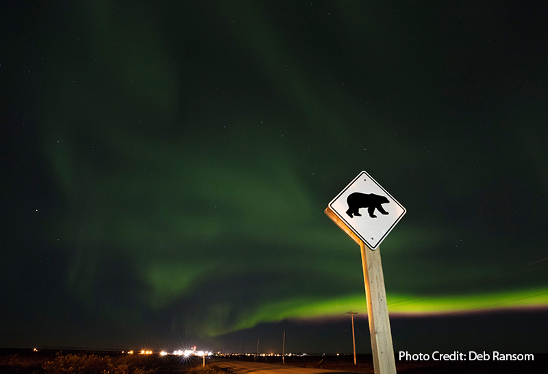 polar bear crossing lights