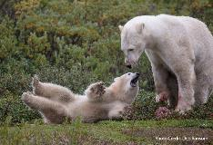 mom and cub playing
