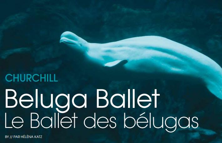 Destination Belugas