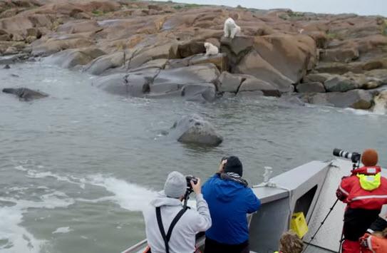 Polar Bear Tour Videos