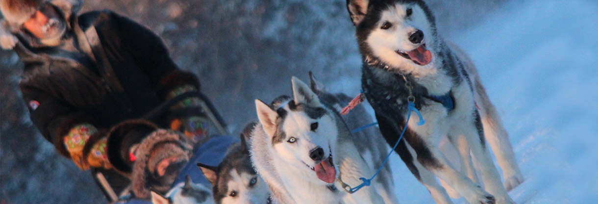 Family Friends Tour Dog Mushing
