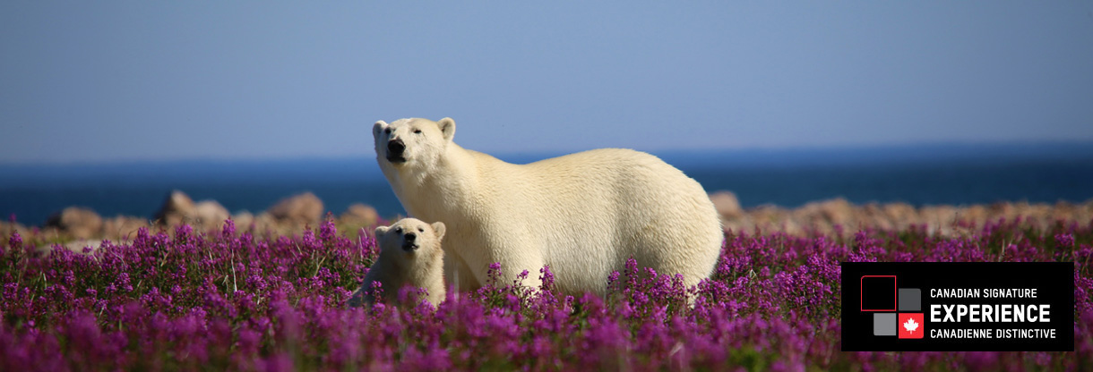 UASA Polar Bear